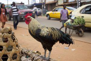 Yaoundé_37_©lecorbeau
